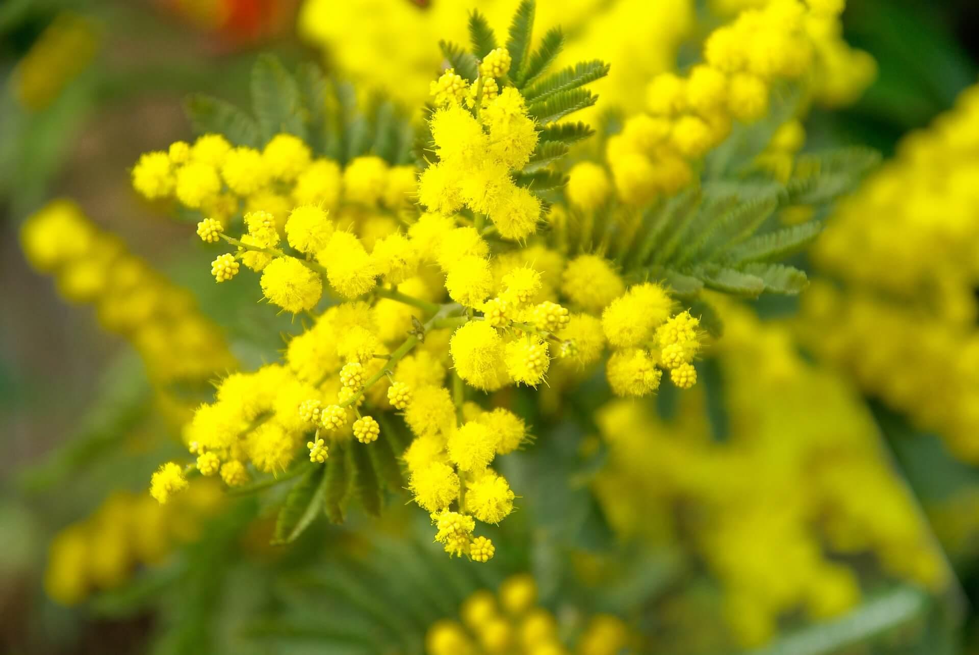 Żółty to kolor zdrowia - sklep.chomik.pl