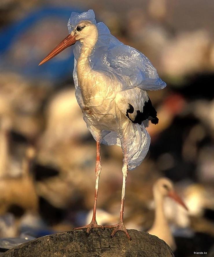 Plastikowe odpady zagrażają życiu dzikich zwierząt l Chomik Gdów
