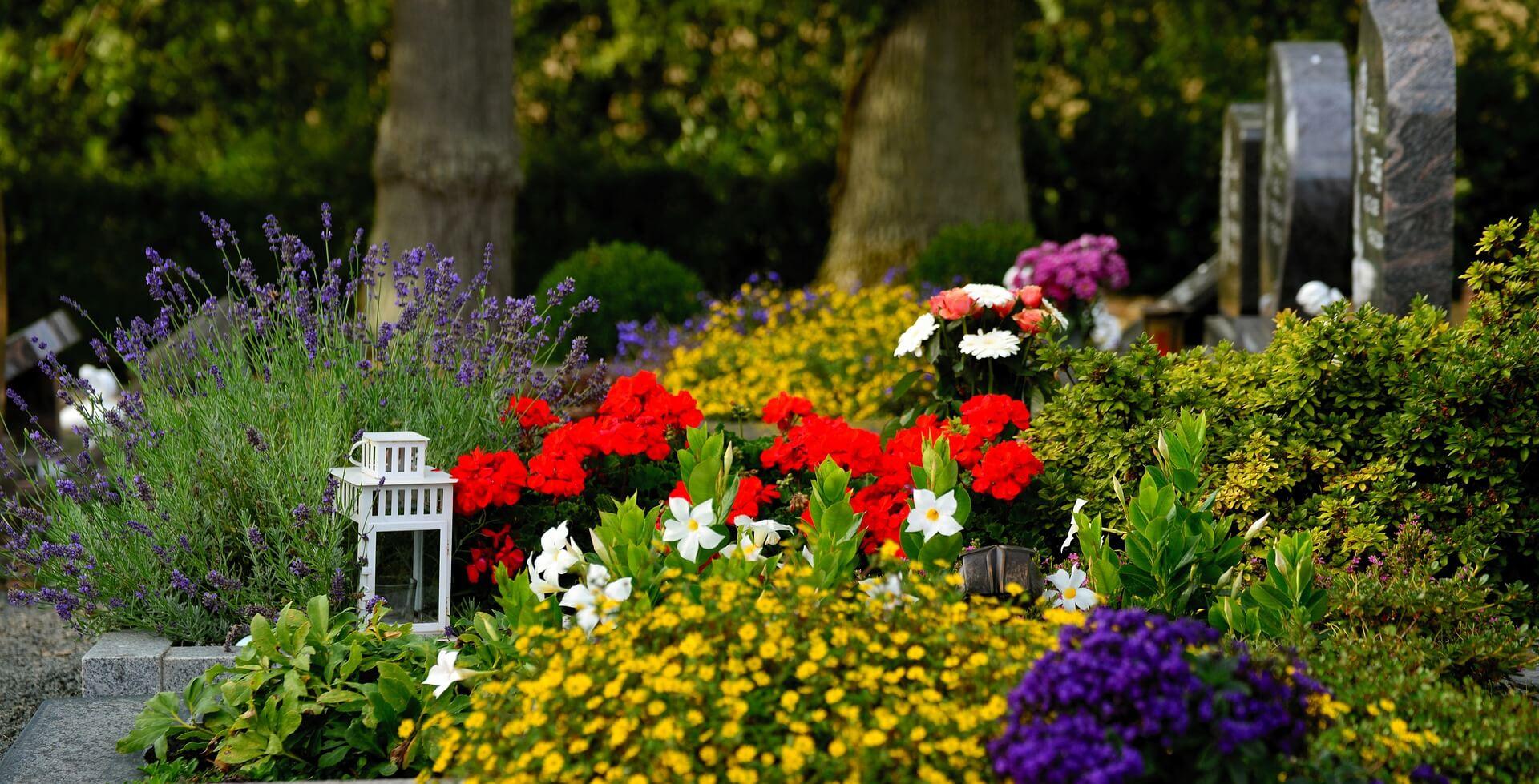 Jakie Kwiaty Na Cmentarz Poradnik Domu Inspiracji